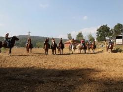 Camping Horse