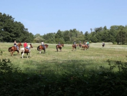 Camping Horse in Piemonte
