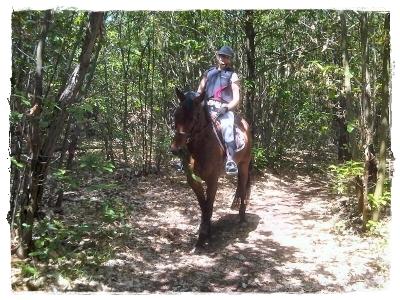 Maneggio cavalli in Piemonte