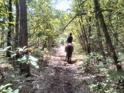 Marcher avec des chevaux dans le Piémont