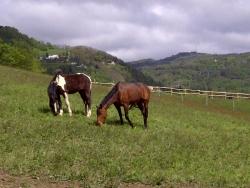 Marcher avec des chevaux